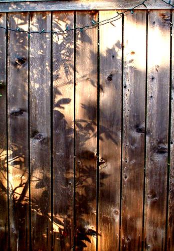 Fence Shadows