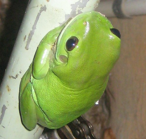 cropped frog