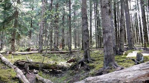 森林 │ 風景 │ 無料写真素材