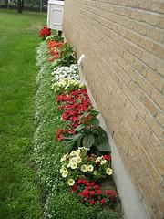 the side garden in July