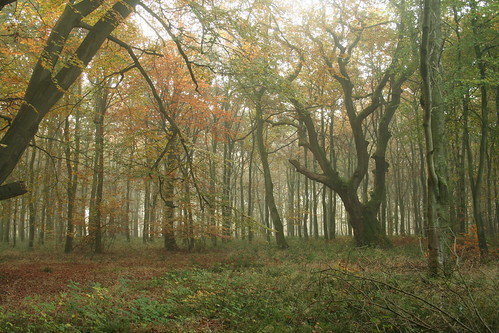 Savernake Forest 70