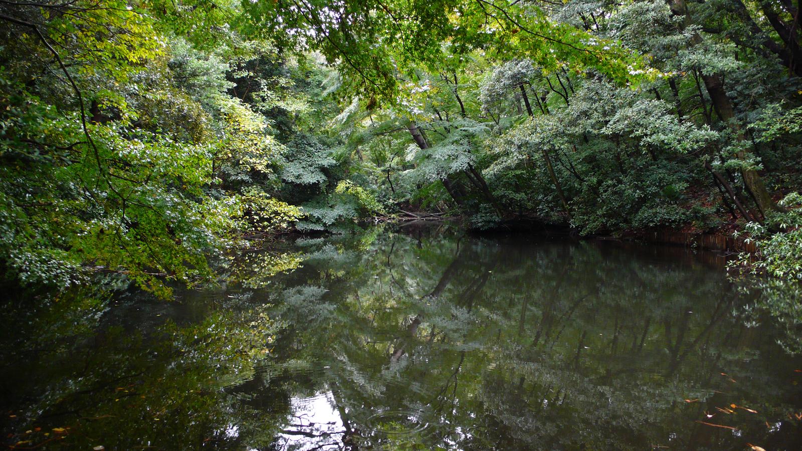 Hyotan Pond ひょうたん池