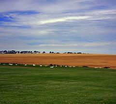 Kikuyu (John_Wilkinson) Tags: landscape eureka durbanville vertorama visserhok
