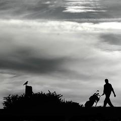 (shaymurphy) Tags: ireland bird silhouette golf greystones crow rook wicklow silhoette aplusphoto excapture explorenov292007344