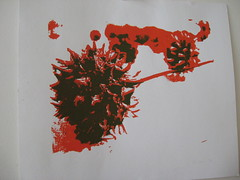 sweetgum silkscreen