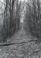 Outside of Saline, MI (Lee Saboro) Tags: railroad nature michigan saline