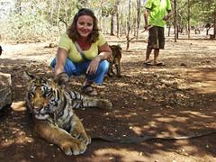 Betsy petting a tiger