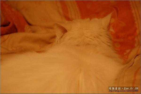 【貓季】天冷被窩睡