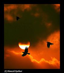 Darksome sky.. (Hamzeh Karbasi) Tags: sunset red sky cloud sun bird iran  esfahan isfahan      hamzeh karbasi hamzehkarbasi