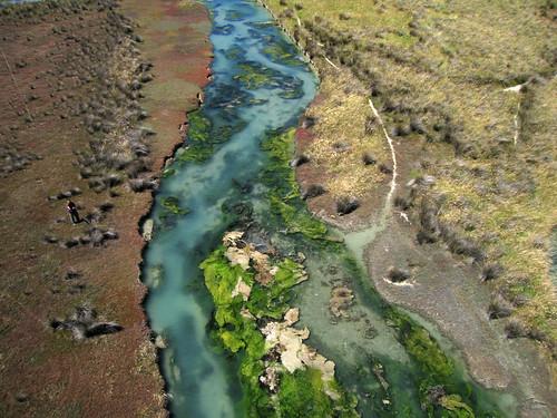 Wakapuaka Sand Flat tidal stream