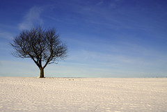 arbol solitario (bdebaca) Tags: winter snow tree germany arbol bayern deutschland bavaria nieve alemania invierno arvore alemanha baviera 10faves qcfaj a3b