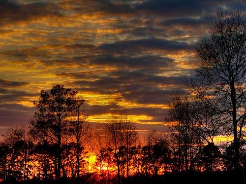 [フリー画像] 自然・風景, 樹木, 夕日・夕焼け・日没, 201108031900
