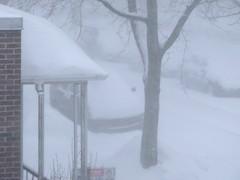 """Blizzard (Martin Ujlaki-All photos """"copyright Martin Ujlaki"""") Tags: winter snow hiver neige blizzard ©ujlaki"""