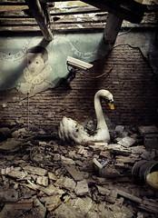 italian order (kbx / kobas laksa) Tags: camera boy wall swan italian painted destroyed