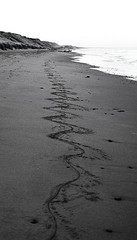 Lines in the Sand by dommmm