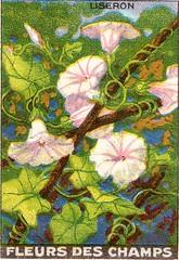 fleurs des champs 7