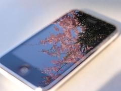 iPhoneと桜