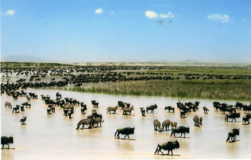 The Great Migrations (image courtesy of La Lince: http://www.flickr.com/photos/lince/1807924020/)