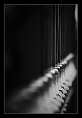 La reja ((Lolita)  8) Tags: reja dof bn verticales ltytrx5 viandar ltytr2 ltytr1 ltytr3 20tfdof