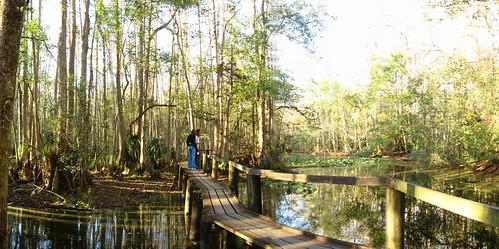 Swamp boardwalk in Sebring, Florida, USA