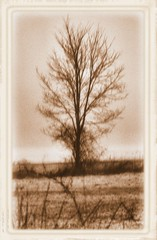 Tree of Antiquity (Wayfaring Wanderer) Tags: tree frame lone treatment oldtimey postprocessing project366