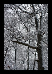 The Snow Tree!! (RajRem) Tags: park flowers blue trees winter girls boy sea vacation plants sun white lake snow tree art beach nature boys water girl smile grass rain boston stone kids photoshop canon river garden relax landscape ma photography pond exposure flickr pretty shot image photos top contemporary massachusetts fineart scenic newengland photographers stormy bluesky drop peoples melrose smiley enjoy beaches tropical mass topic medford malden bostonist snowtree snowtrees fineartphotos fallsway mywinners abigfave anawesomeshot aplusphoto massachusettslife bwartaward academyofphotographyparadiso avision