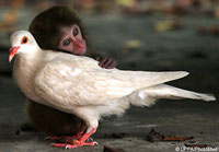 monkeypigeonlove