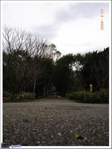 陽明山花季 030
