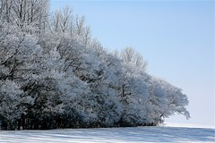 Jack Frost (Ken Yuel Photography) Tags: trees winter snow frost country manitoba clear crisp jackfrost explored mywinners anawesomeshot diamondclassphotographer flickrdiamond theperfectphotographer goldstaraward llovemypic digitalagent explorewinnersoftheworld