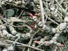 Frühling. Spring (leopanta*) Tags: red macro berlin texture nature closeup spring explore 2008 charlottenburg berlincharlottenburg canonpowershotg2 freshminds greenmonstersgroup leopanta structuresandtextures