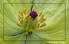 floral abstruct_2 (Sumt Chakraborty) Tags: naturegroup blueribbonwinner 10faves mywinners superaplus aplusphoto flickrhearts diamondclassphotographer flickrdiamond flickrsun examplaryshotsflickrsbest platinamheartaward ultimatescore bettrthangood
