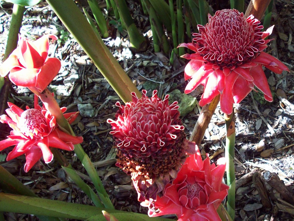 Fairchild tropical botanic