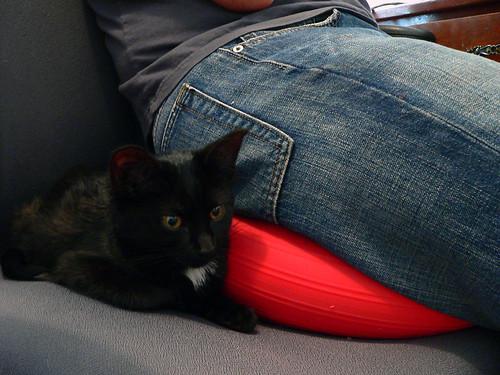 new cat 3