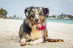 IMG_5553-2 (megscapturedtreasures) Tags: dog portraits edited beach