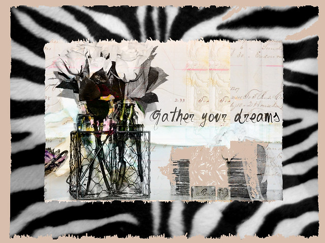 gather your dreams zebra
