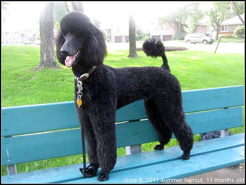Jackson 11 months old 001