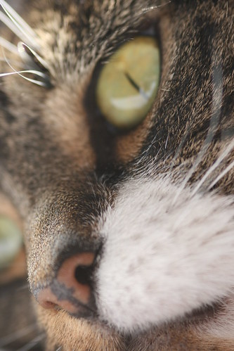 Cat's Nose Close Up 2