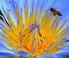 FLOWERS (peo pea) Tags: flowers flower nature vespa natura ape fiori palermo fiore piante ortobotanico orto naturalmente flickrphotoaward naturewatcher peopea wwfita