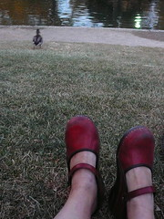 unseasonable (h. wren) Tags: newmexico feet shoes albuquerque dansko unm duckpond unseasonablywarm
