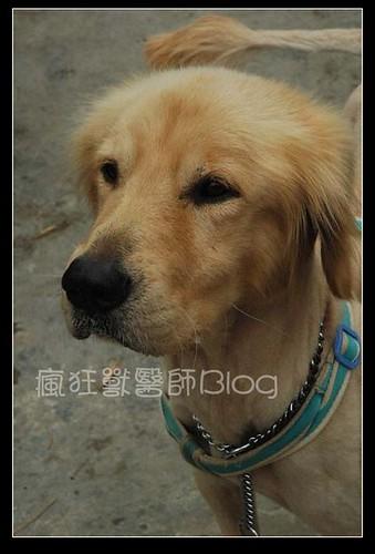 blog大寶1