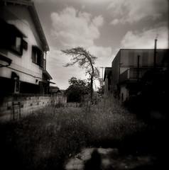 amnesia : outtake 1 (TommyOshima) Tags: summer tree monochrome square holga 120film hp5 ilford amnesia gcfn monochromia