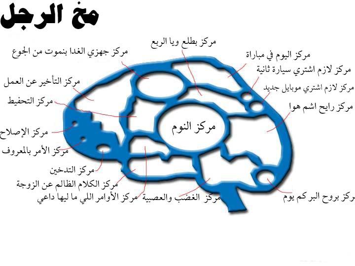 d9a46af06a075 شوفو الفرق بين مخ الرجل ومخ المراة - منتديات مكاوي