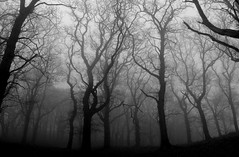 woodland mist (cjb22) Tags: trees blackandwhite mist fairytale forest woodland dark still december mood gothic dream peaceful eerie haunted dorset melancholy magical stillness soulful enchanted hardy dreamcatcher enchantedforest wessex vob bwdreams 10faves darknature abigfave canong7 anawesomeshot piddlevalley diamondclassphotographer flickrdiamond fotocompetitionbronze