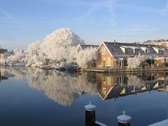 Leiden (Eisbeertje) Tags: winter holland leiden sneeuw nederland centrum rembrandtpark zuiholland