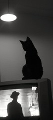 backlight (deep_onion) Tags: bw backlight cat tv 100v10f bn sihlouette blancinegre yourfavorites tot thelittledoglaughed veterinarifotografi deeponion