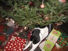 (JUSTINCJ) Tags: dog ophelia