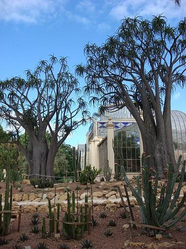 Adelaide Botanic Gardens