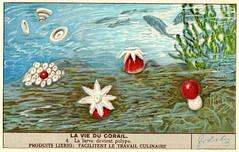 corail 4