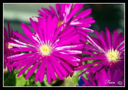 Belleza de flor y semilla de la vida