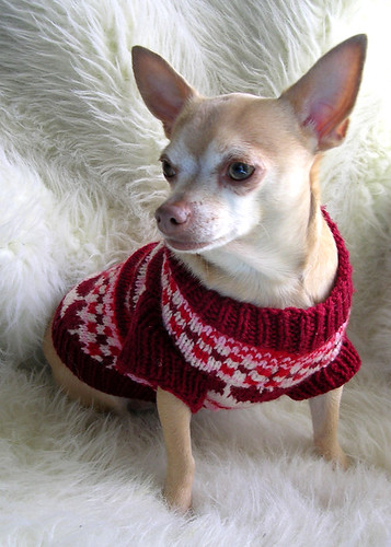 dog clothing pattern